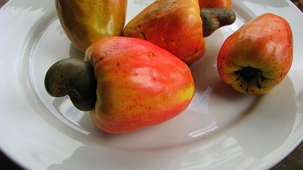 Cashew apples - ALEX POPOVKIN