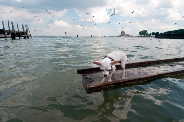 Chihuahua on a raft at the 95th Street Beach in Chicago - LLOYD DEGRANE