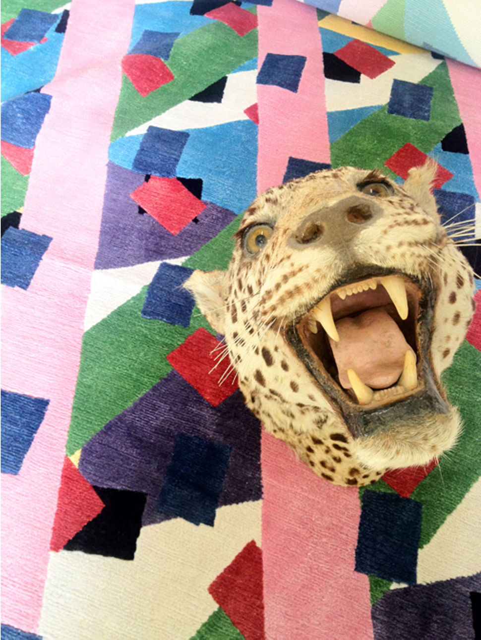 Chillin.   Taxidermy leopard head from Room for Views