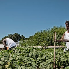 From Farm to Food Desert