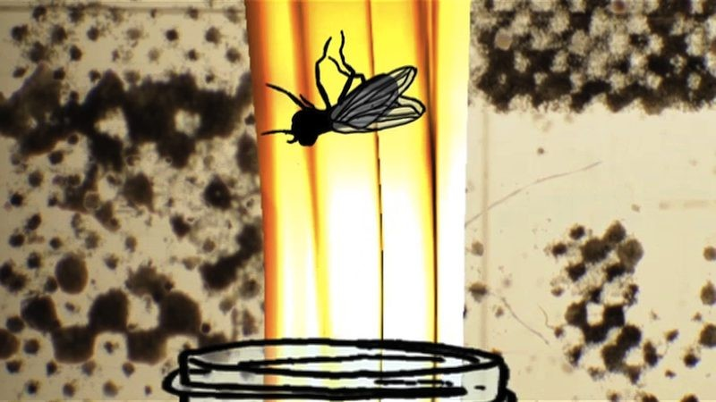 From one of Bodurins mixed-media animations