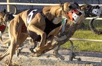 What's Really Happening to Dairyland's Greyhounds