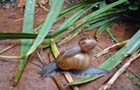 Frogs and snails: try this at home?