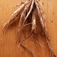Key Ingredient preview: burdock root