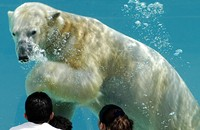 <i>Reader</i>'s Agenda Mon 2/25: Polar Bear Awareness Week, Michael Hainey, and Amos Guiora