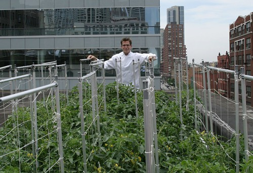 Rick Bayless in the rooftop garden above Topolobampo and Frontera Grill on Clark Street.
