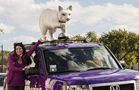 Show us your . . . Catmobile