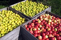 Start hoarding HoneyCrisps