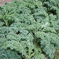 Living with kale and Medicare