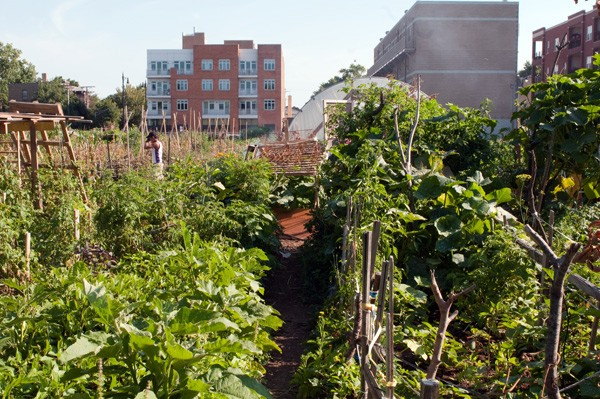 The Global Gardens Refugee Training Farm sits on a city-owned lot just to the west of the river and Ronan Park. - ANDREA BAUER