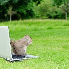 This squirrel is ready for college.