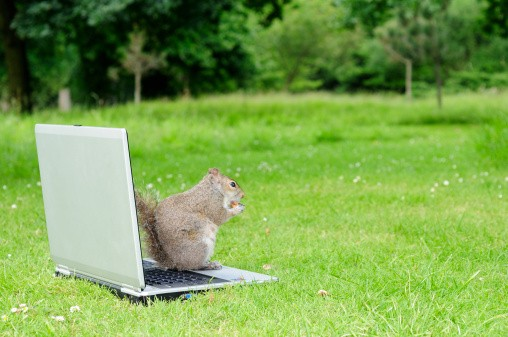 This squirrel is ready for college
