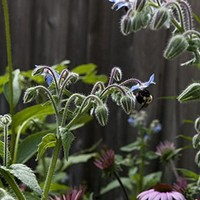 How a Chicago master gardener transformed her yard from bleak to bountiful