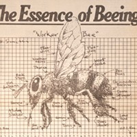 The 20,000-word article on bees that would forever define the <i>Reader</i>