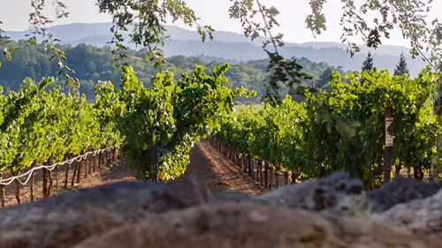 A vineyard, from the Next: Terroir trailer - NEXT