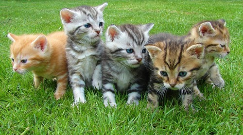 Kittens to the rescue in Brussels! - GETTY