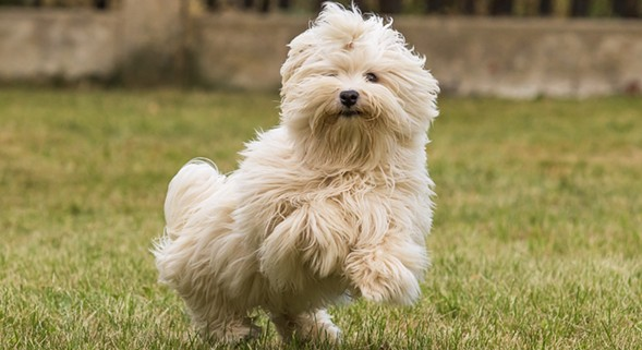 """The election goes to the dogs during the """"paw-litically""""-themed Mutt Strutt on Sat 10/22. - GETTY IMAGES/ISTOCKPHOTO"""