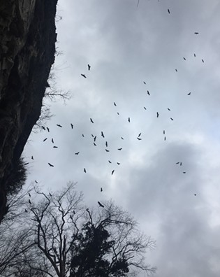 Birds of prey circle above Cave-in-Rock. - RYAN SMITH