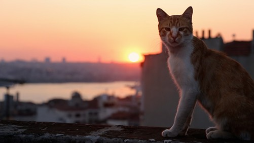 The documentary Kedi screens at the Chicago Athletic Association on December 10.