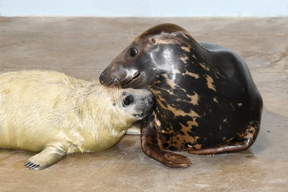 The baby and his mom, Lily - COURTESY BROOKFIELD ZOO