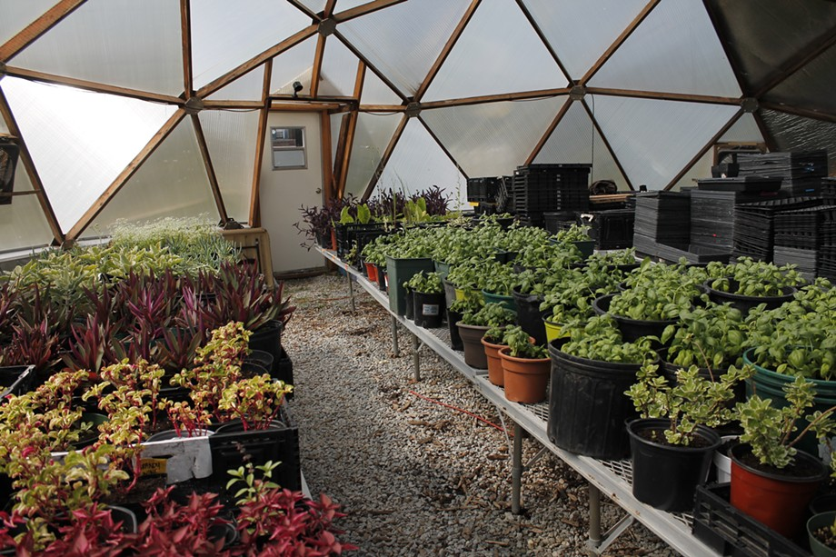 A geodesic dome built in 2017 at the South Chicago UGC farm has been helping the collective and its partners grow produce year-round. - ADAM M. RHODES