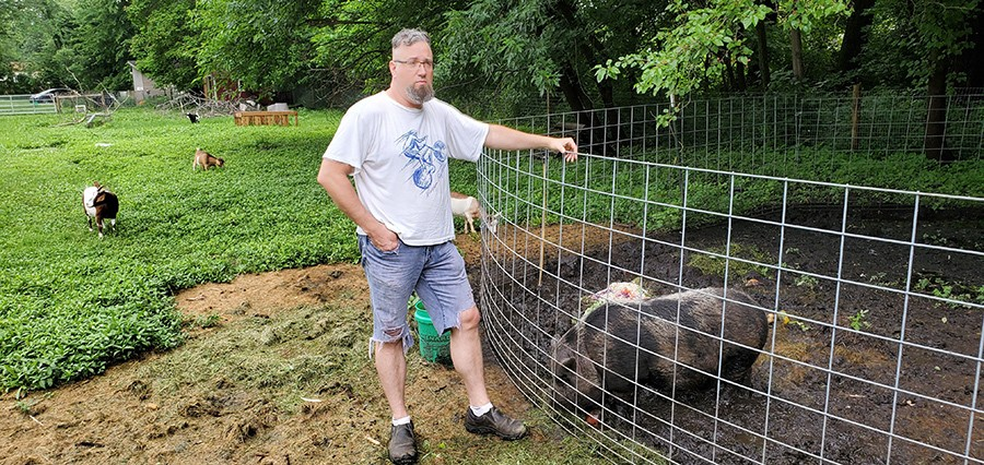 """One of Leise's hogs is named """"Hamilton."""" - MARK GUARINO"""