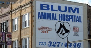 Best veterinarian