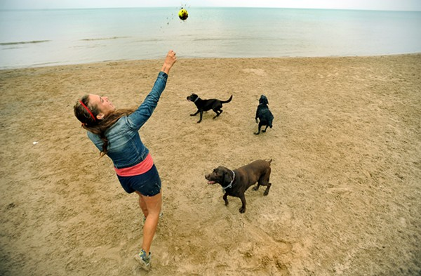 best_dog_park-montrose_dog_beach-1.jpg