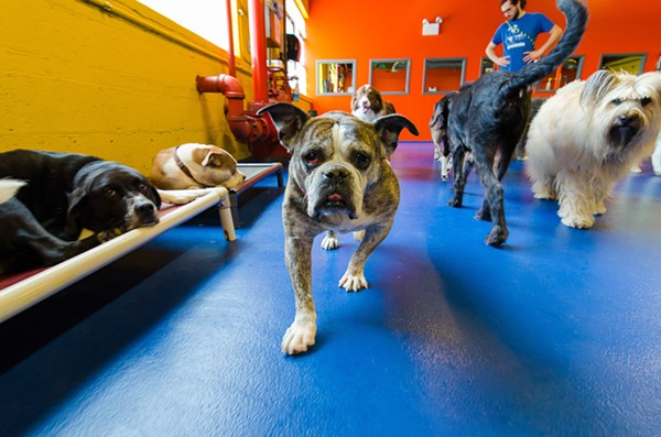 best_doggie_daycare-urban_pooch-1.jpg