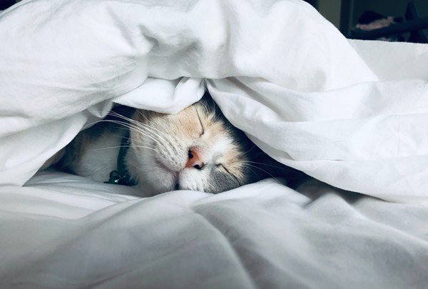 Get under the covers and take a paws.