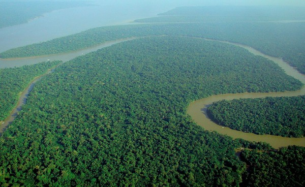 An aerial view of the Brazilian rainforest.
