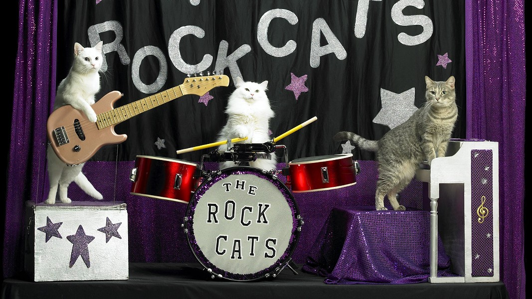 Tuna and the Rock Cats! make a rare, Instagram-worthy appearance with the Amazing Acro-Cats Thursday 10/19. - VIA ARTIST
