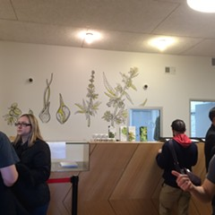 Make and Company designed murals for Dispensary 33's clean, open space.