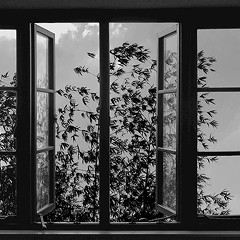 24 Frames, the final feature from Iranian master Abbas Kiarostami, may send you into a trance