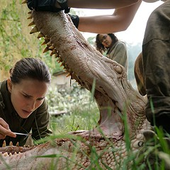 Annihilation preserves the source novel's biological nightmare but dispenses with its mounting paranoia