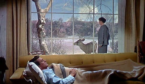 Douglas Sirk's five best films | Bleader