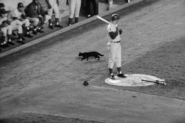Santo and cat