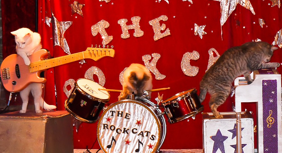 Tuna and the Rock Cats join the Acro-Cats for a weekend of feline fun. - CHRISTINA HSU