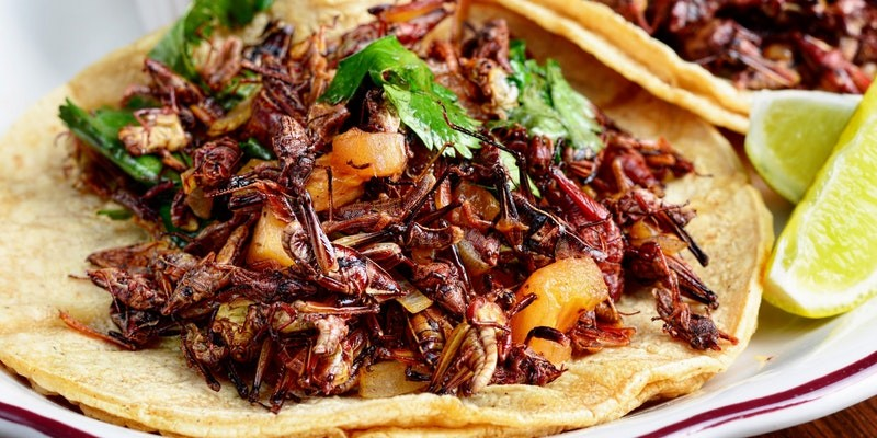 Cricket tacos, among other oddities, are served at the Strange Foods Chicago Festival on Sun 11/5. - COURTESY OF STRANGE FOODS FESTIVAL