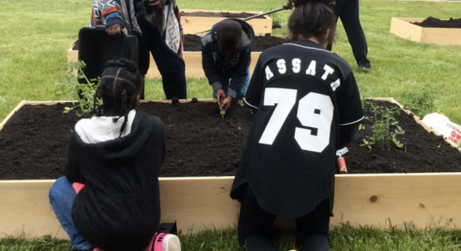 At Assata's Daughters' community garden youth grow food for Washington Park neighbors. - COURTESY ASSATA'S DAUGHTERS' GARDEN