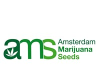 Where to buy cannabis seeds online