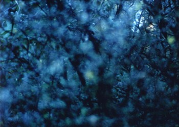 Ecstasy on film: Nathaniel Dorsky discusses <i>The Arboretum Cycle</i>, his latest work of devotional cinema, which he'd prefer you watch alone