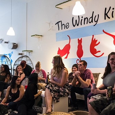 Windy Kitty Cat Cafe