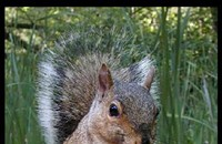 Attack of the gourmet squirrel