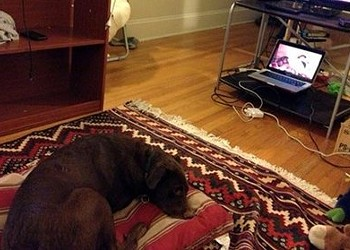 What happened when my dog watched DogTV