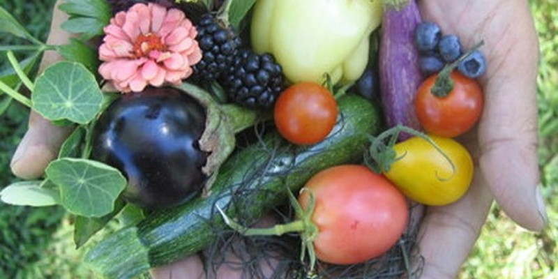 A handful of fruits, veggies, and flowers waiting to be picked from Kelder's Farm in Kerhonkson.