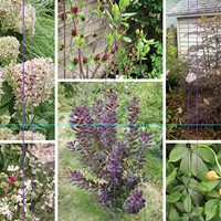 A New Home for Unsung Shrubs