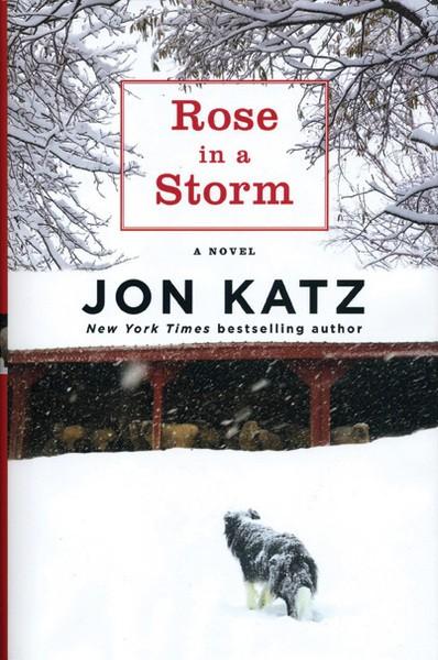 rose-in-a-storm_katz.jpg
