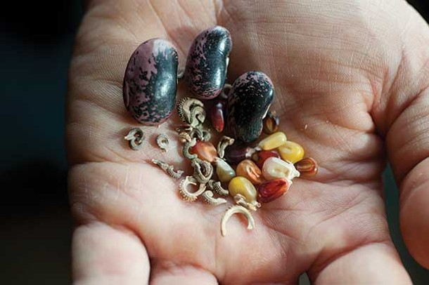 Calico Popcorn, Scarlet Runner Bean, and Flashback Calendula Mix from Hudson Valley Seed Library. - ROY GUMPEL
