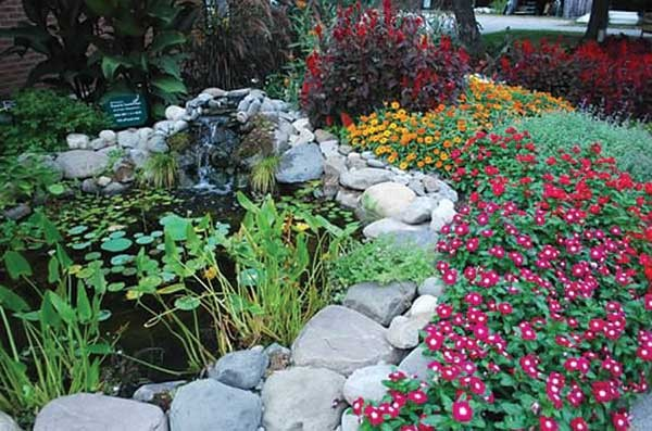 Calming water feature and energizing annual border.